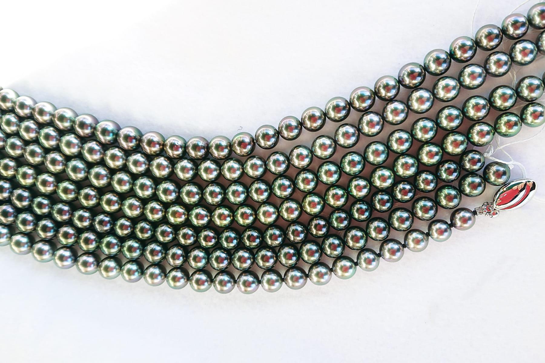 黒蝶真珠写真