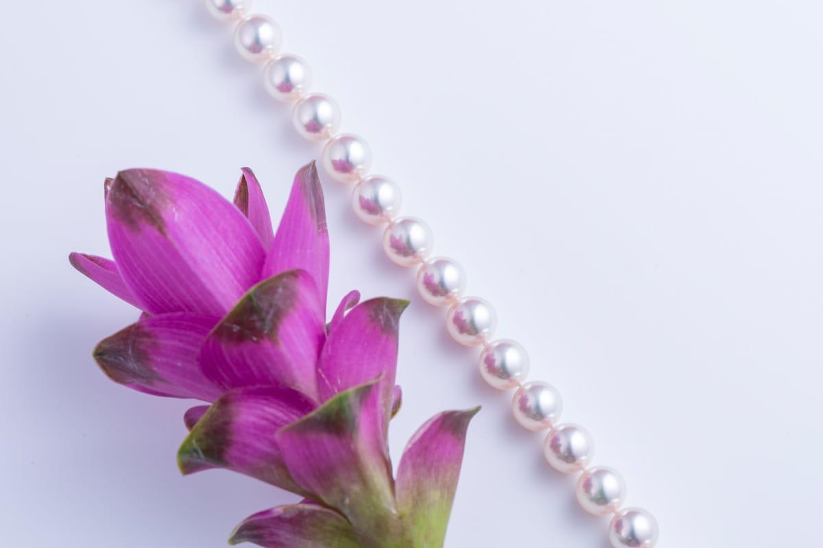 特選真珠写真